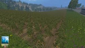 Forgotten Plants Potatoes Textures V 1 0 (7)
