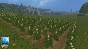 Forgotten Plants Potatoes Textures V 1 0 (8)