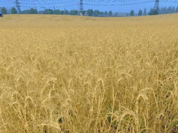 Weizen Textur von Gerste und Raps V 3.0 LS15 (11)