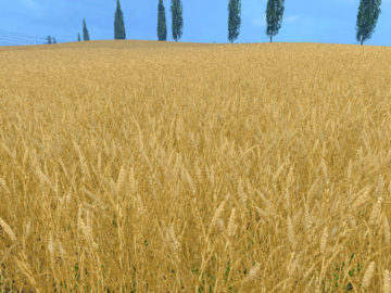 Weizen Textur von Gerste und Raps V 3.0 LS15 (14)