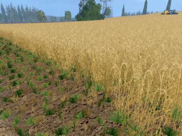 Weizen Textur von Gerste und Raps V 3.0 LS15 (18)