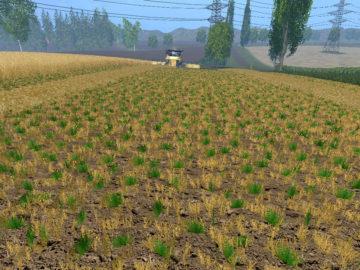 Weizen Textur von Gerste und Raps V 3.0 LS15 (19)