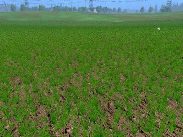 Weizen Textur von Gerste und Raps V 3.0 LS15 (4)