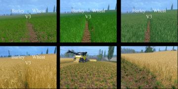 Weizen Textur von Gerste und Raps V 3.0 LS15 (6)