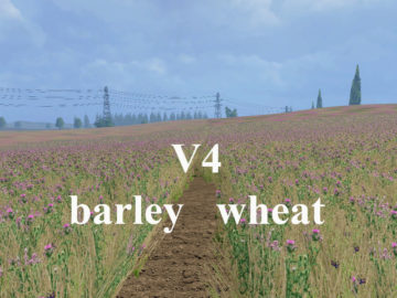Weizen Textur von Gerste und Raps V 4 Mod (3)